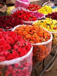 Bangalore Flowers