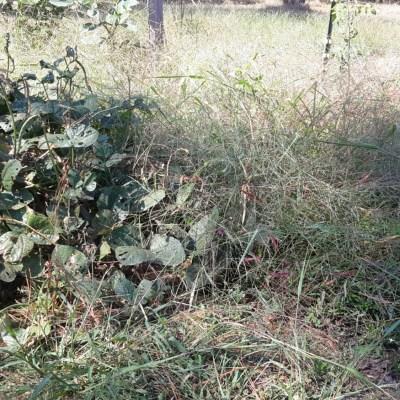 Overgrown Garden