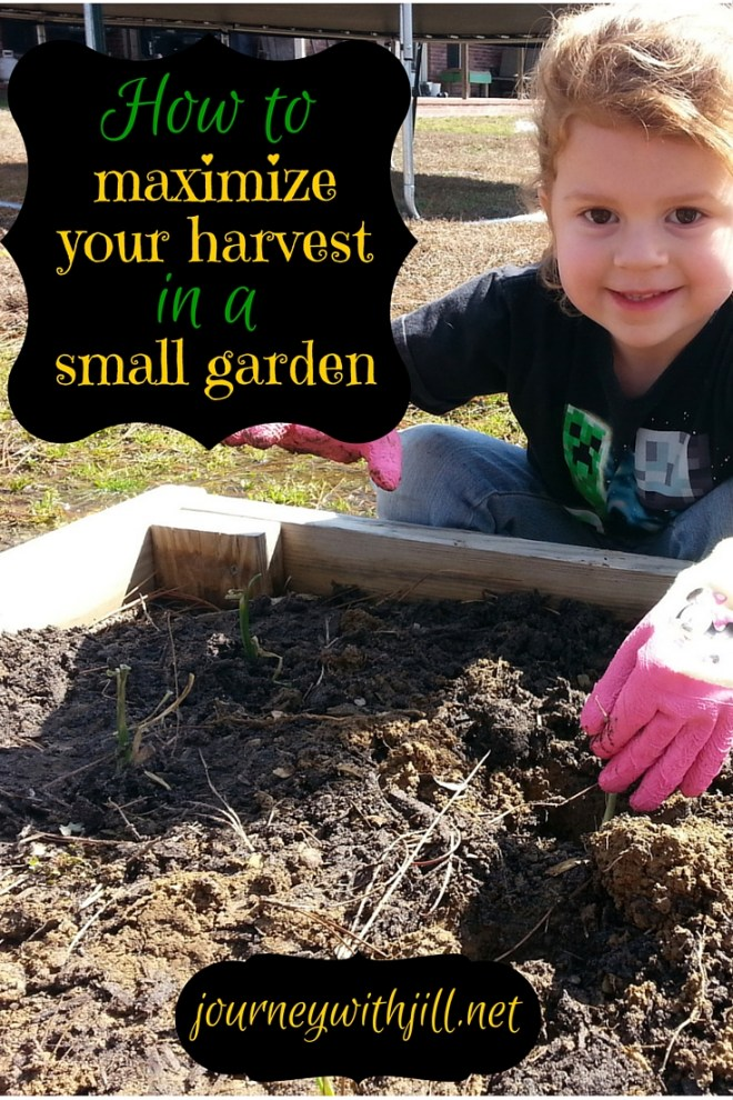 How to Maximize Your Harvest in a Small Garden | Journey with Jill