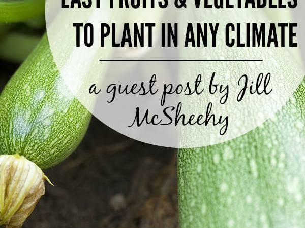 Easy Fruits & Vegetables for Beginning Gardeners to Plant in Any Climate