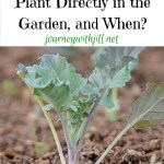 Planting Seeds Outdoors: What and When?