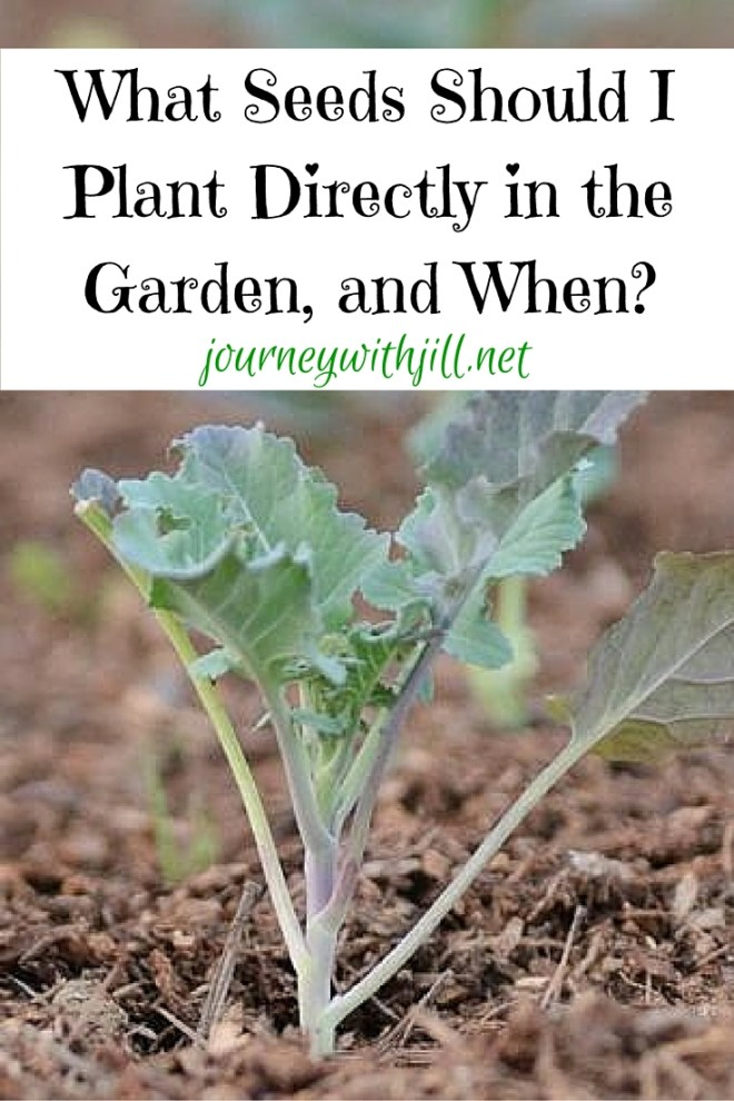Planting Seeds in the Garden: What and When
