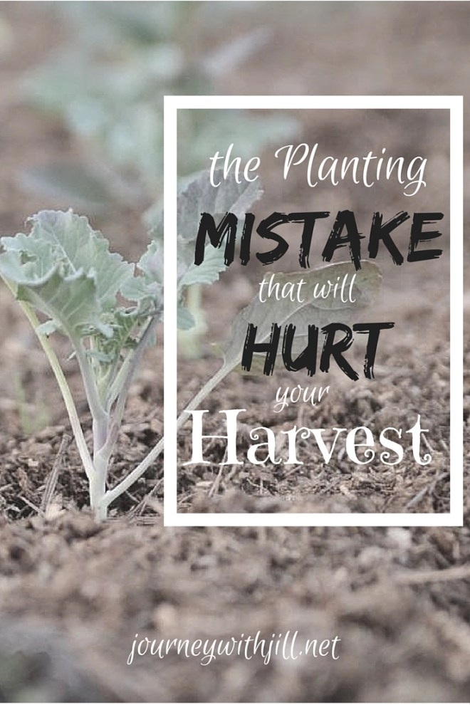 The Planting Mistake that will hurt your harvest | Journey with Jill