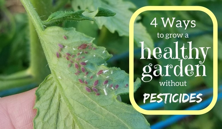 4 Ways to Grow a Healthy Garden without Pesticides
