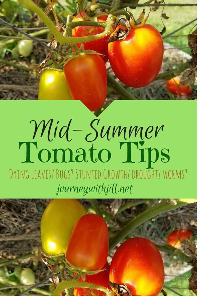 Mid-Summer Tomato Tips