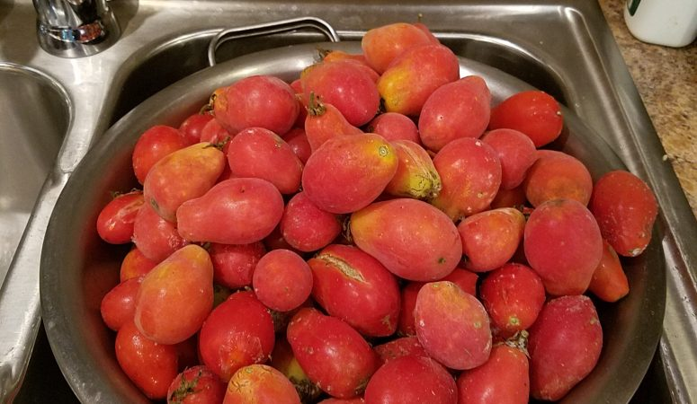 Preserving Tomatoes – Making the Most of Your Harvest {Beginner's Garden Podcast}