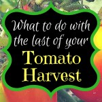 What to Do with the Last of your Tomato Harvest