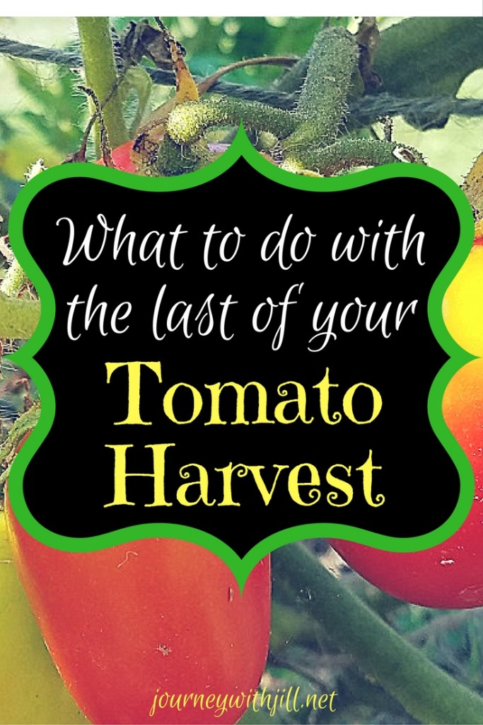 What to Do with the last of your Tomato Harvest | Journey with Jill