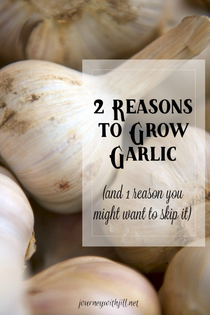 Reasons to grow garlic and 1 reason not to