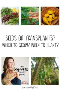 Seeds or Transplants? Which to Grow? When to Start