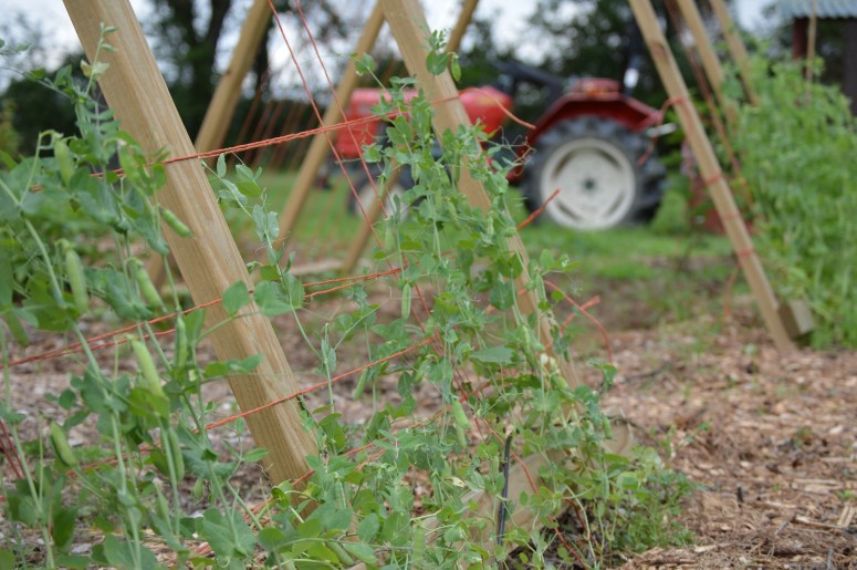 Pea Garden Trellis | Journey with Jill