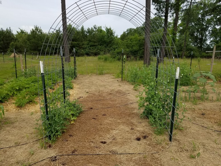 Garden Arch Trellis for Cucumbers and Beans