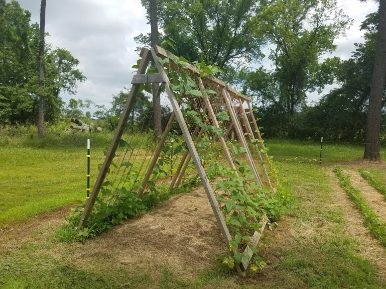 A-Frame Garden Trellis | Journey with Jill