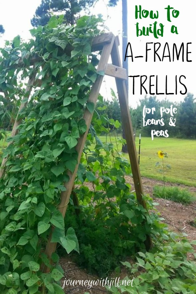 how to build an a frame garden trelllis for pole beans