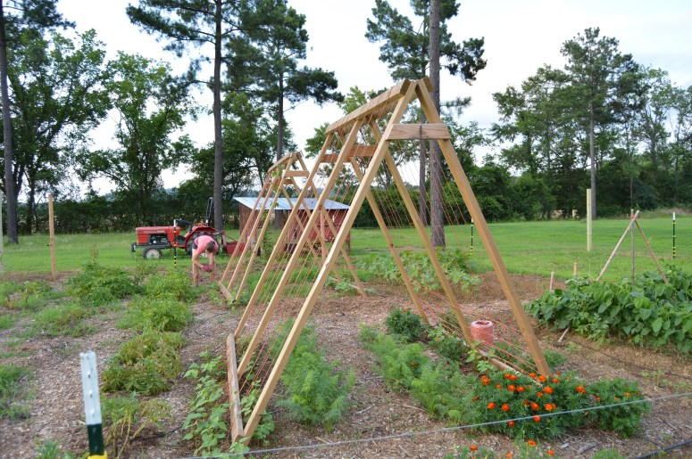 A-Frame Bean Trellis | Journey with Jill
