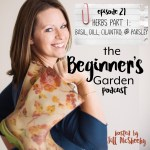 Herb Basics Part 1: Basil, Dill, Cilantro, and Parsley {Beginner's Garden Podcast}