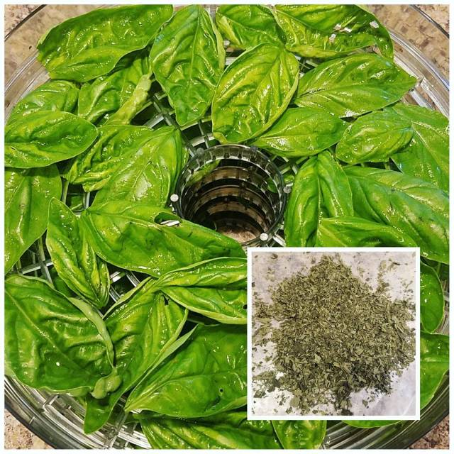 I  drying fresh herbs for use all year! Myhellip