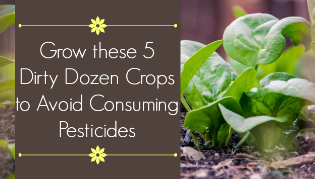 Grow these 5 Dirty Dozen Crops to Avoid Consuming Pesticides