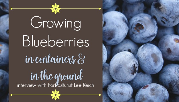 Growing Blueberries in Containers and in the Ground – Interview with Lee Reich