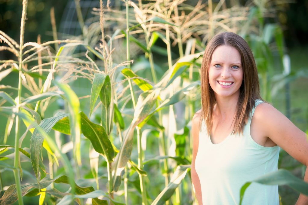 corn tassels before harvest