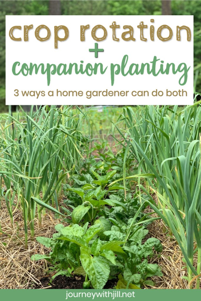 crop rotation and companion planting