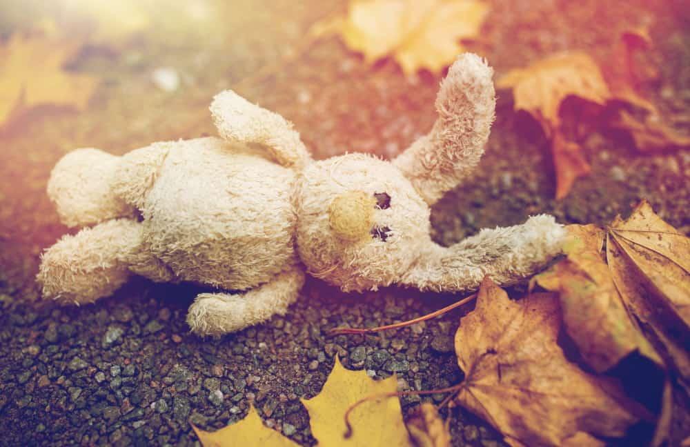 toy-rabbit-and-autumn-leaves-on-road-or-ground-PJYTAU6