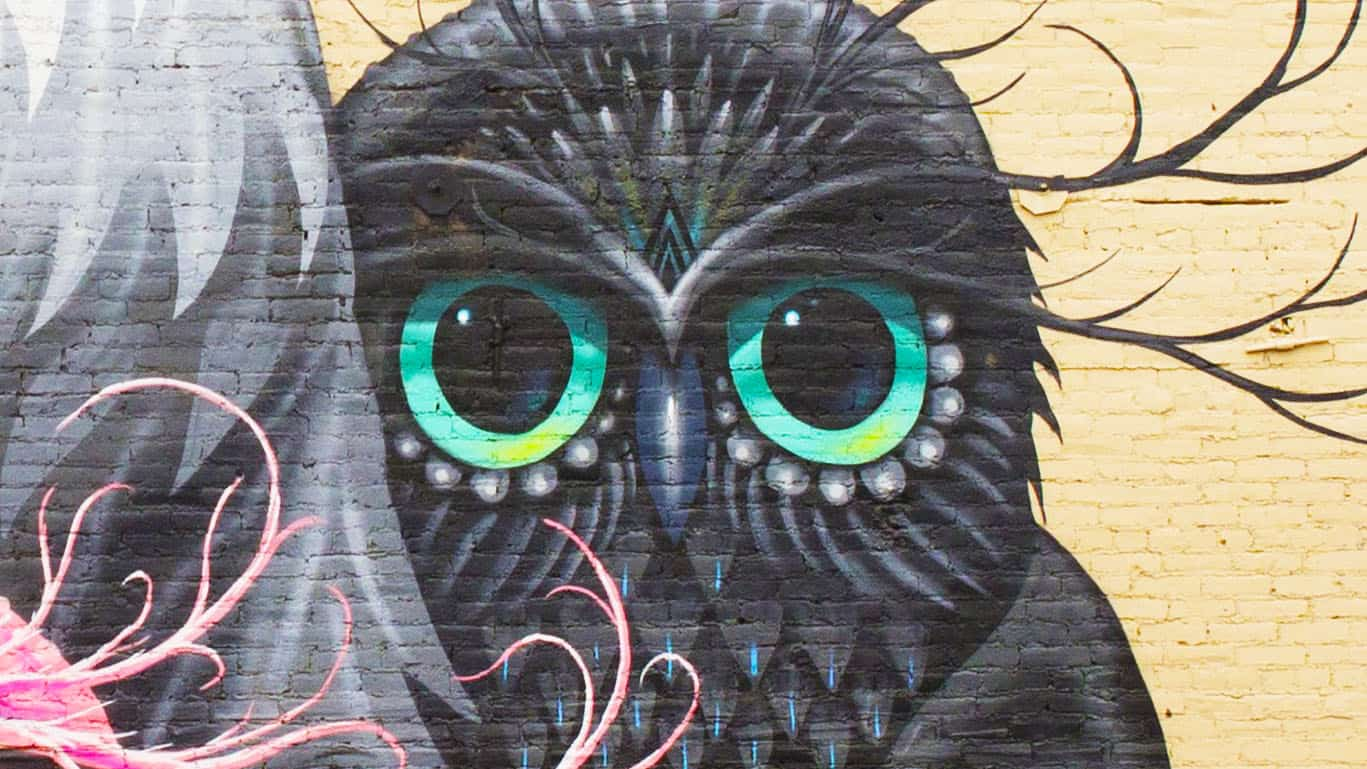 cover owl