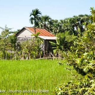 Cambodia's beautiful green rice fields