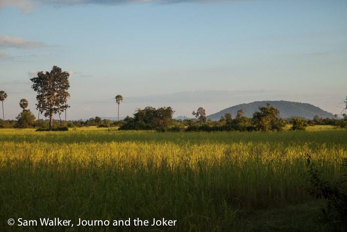 Rice fields in morning light