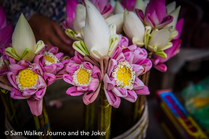 Lotus flowers are a popular offering at Buddhist celebrations