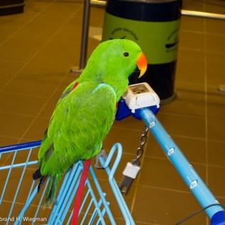 papegaai 3