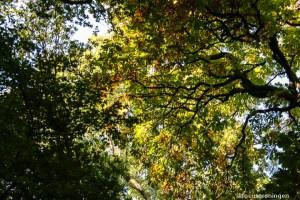 natuur, bomen en bossen