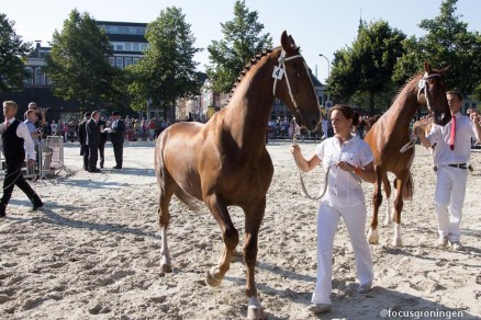 groningen-centrum-groningen ontzet-ossenmarkt paardenkeuring-6