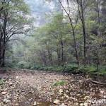 Golden Whip Stream (金鞭溪大峡谷)