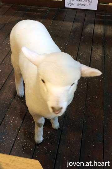 Thanks Nature Café (Sheep Café)