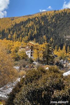 IMG_1611-20191023-daocheng-yading-nature-reserve-sichuan