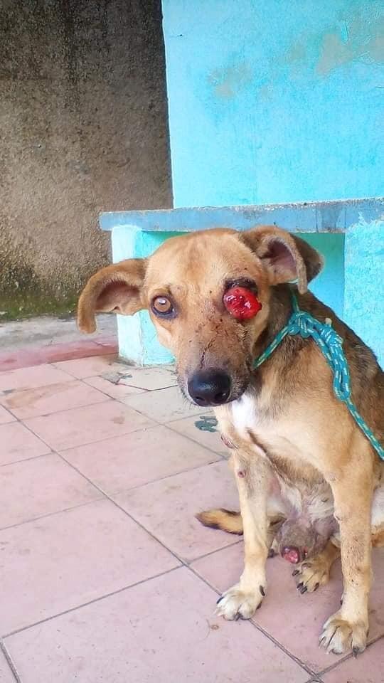 Con la piel llena de tumores y un ojo aparentemente perdido, Vagabundo pedía ayuda a gritos. Foto: Facebook