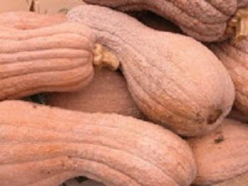 Italian Pumpkin