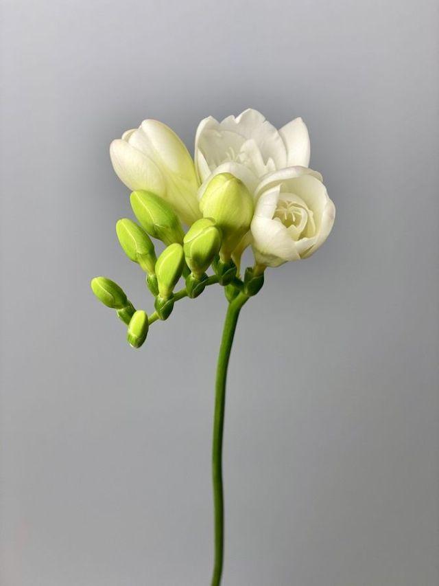 Цветочный гороскоп по дате рождения: узнайте, какой вы цветок 9