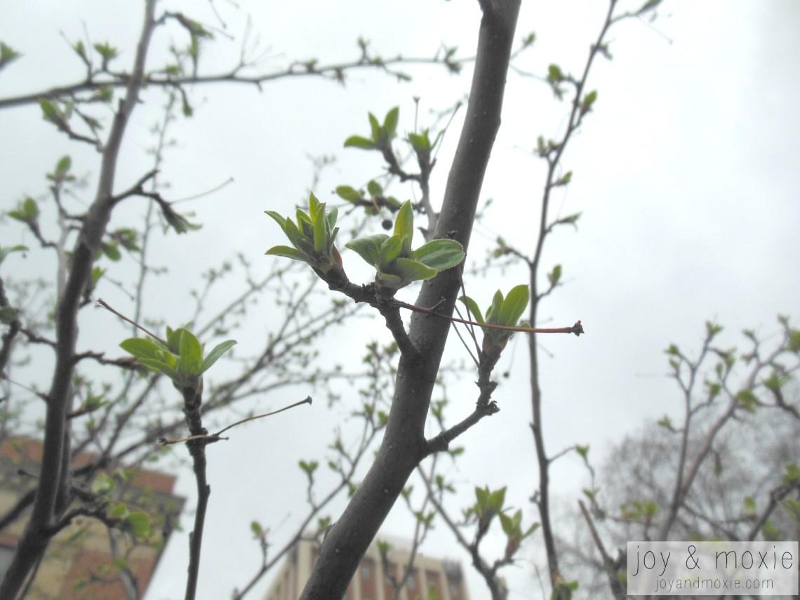 greenjam-03.13.16