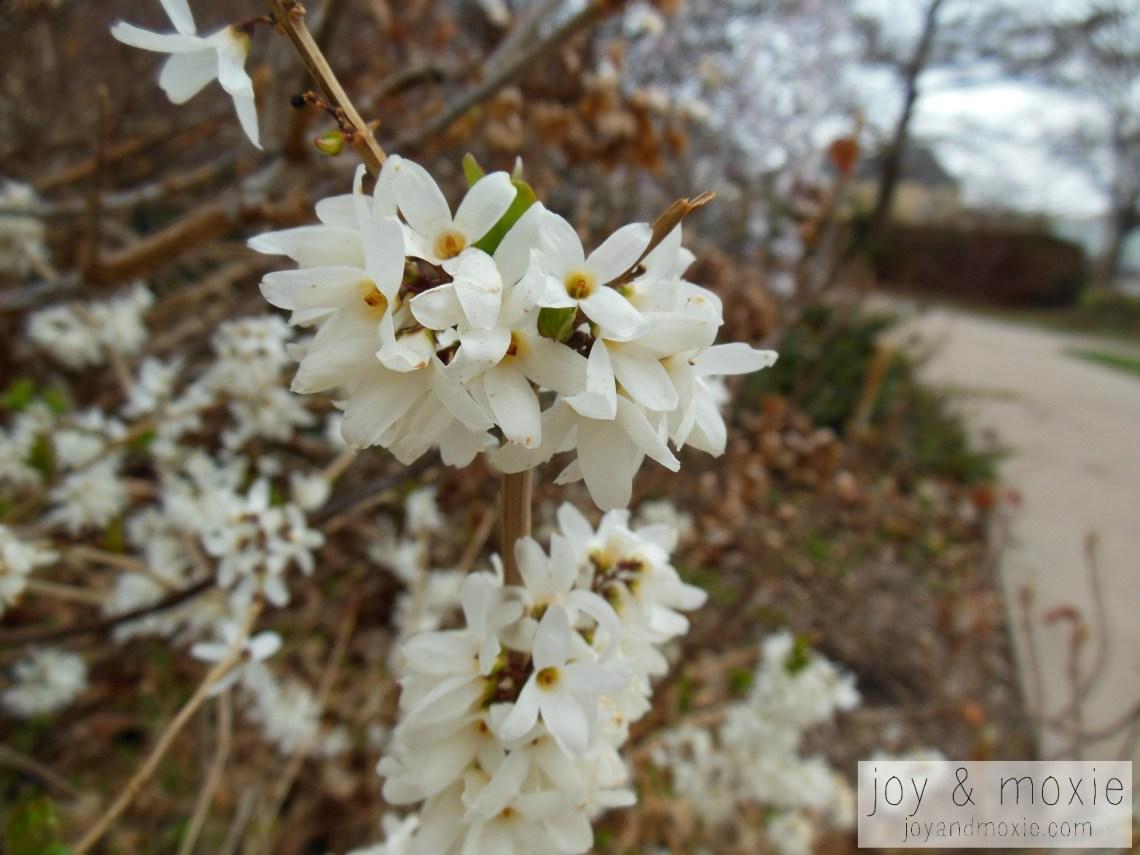 whitebush-jam03.13.16