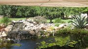 Pond covered 1