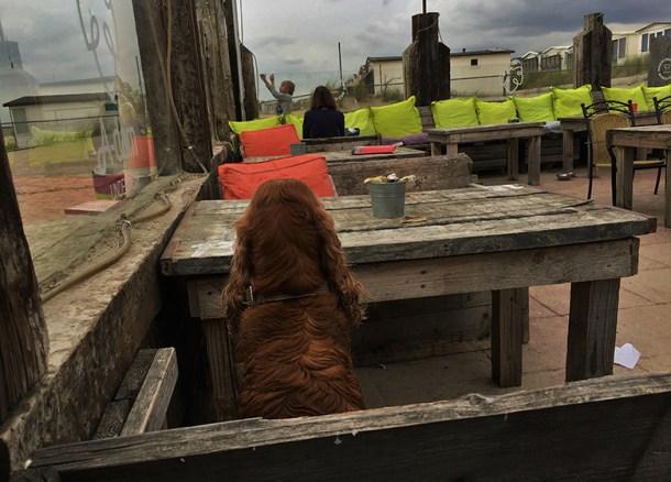 moping kuzco