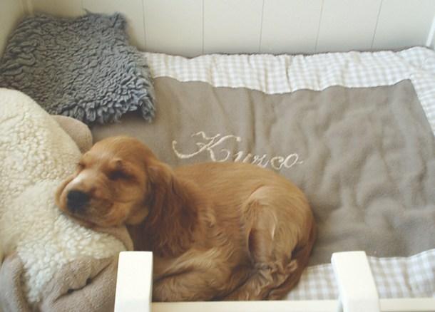 kuzco puppy