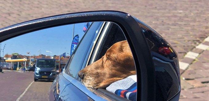 kuzco sunbathing