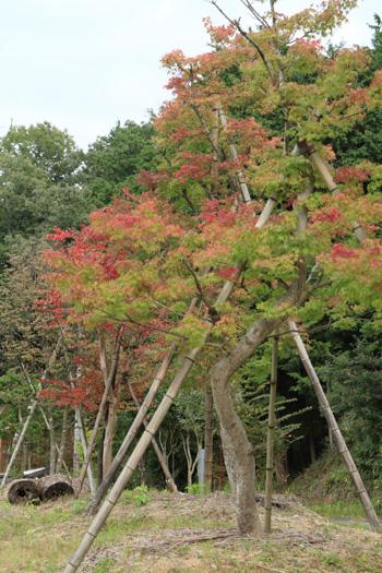 yubunezakakodainookakouen3