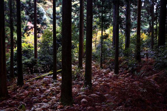 ameagarinookuyama3