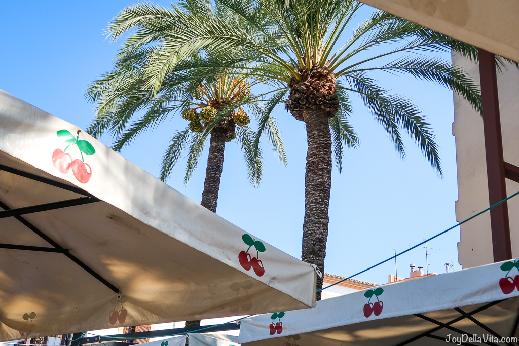 Pacha cherry and palm tree Ibiza Eivissa Sightseeing September