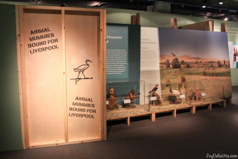 Animal Mummies World Museum Liverpool