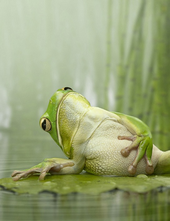 dramatic frog